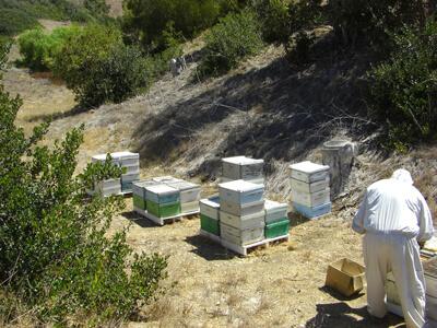 Ideal Beekeeping Land