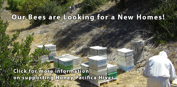 Looking for Beekeeping Land in California